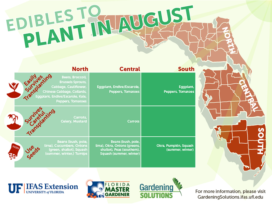UF IFAS Edibles to plant for August