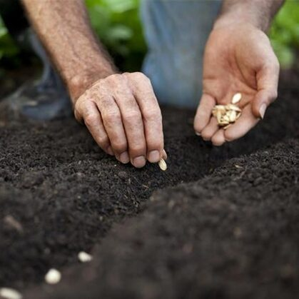 Plant Seeds in the Ground