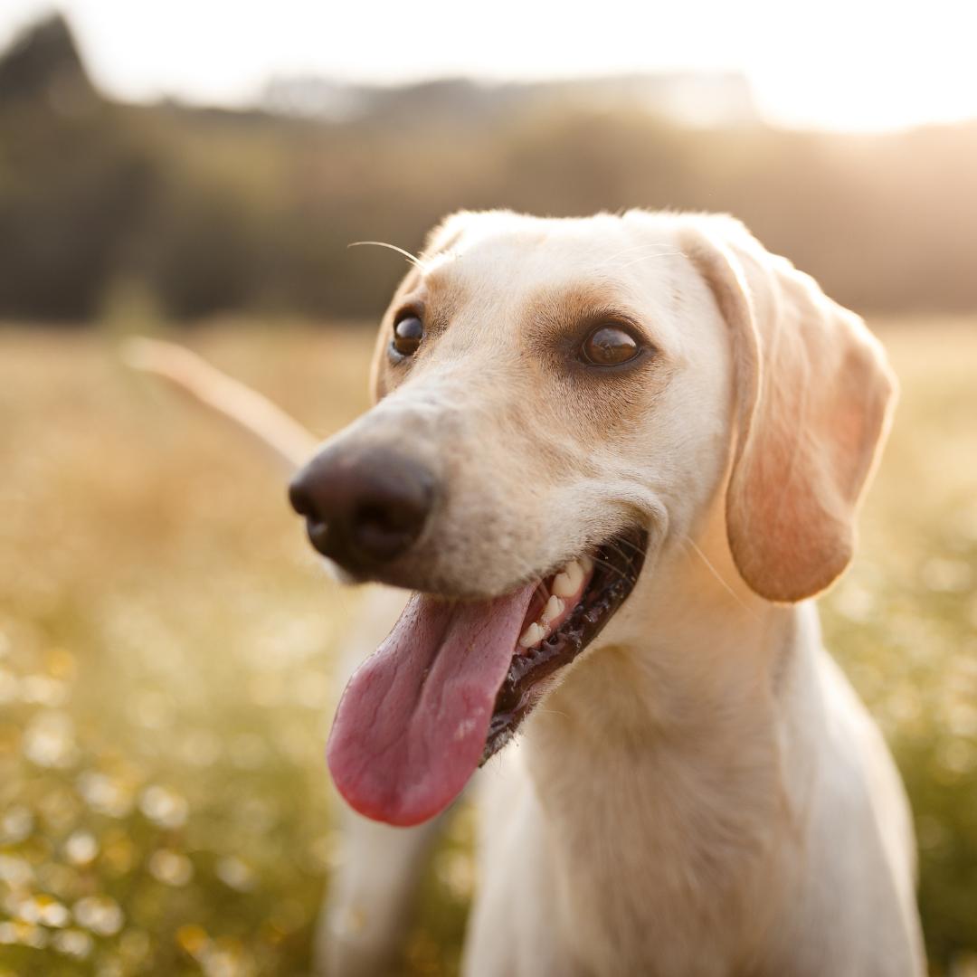 Happy and Confident Dog