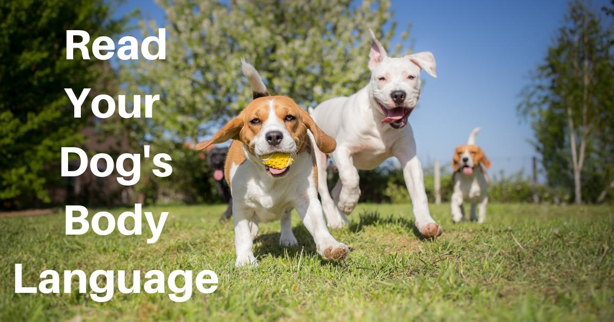 Read Your Dog's Body Language