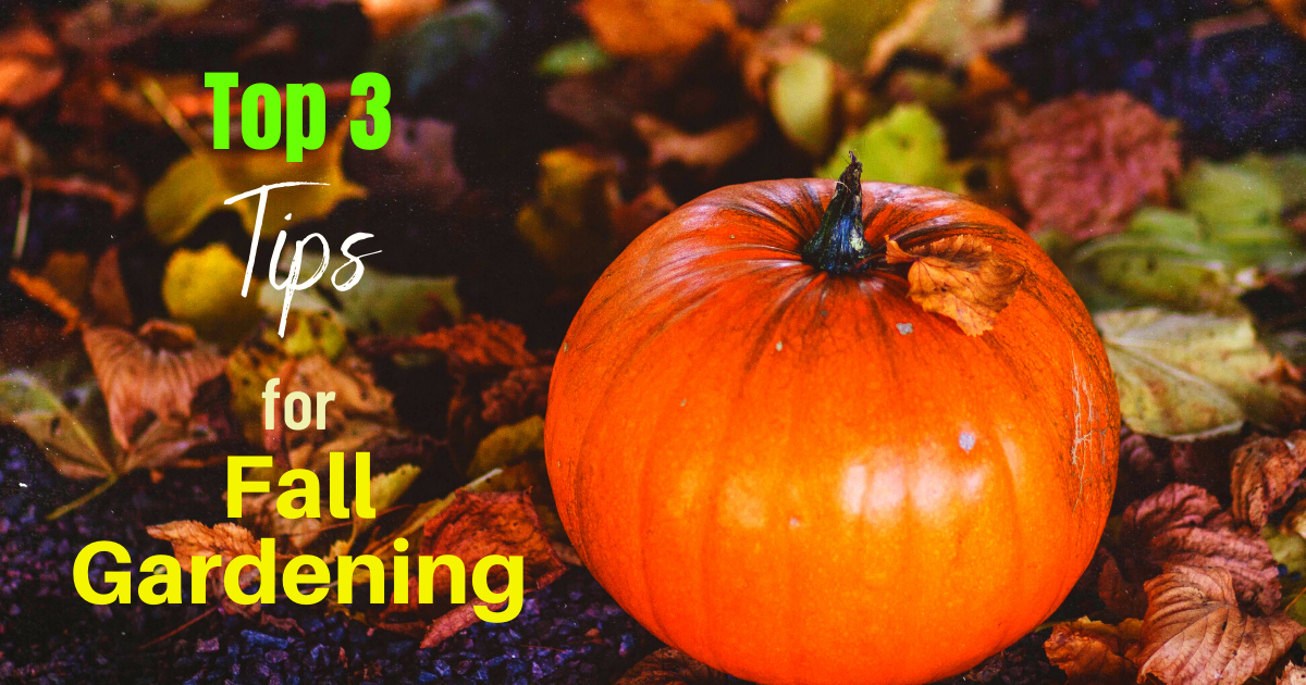 Top 3 Tips for Fall Gardening