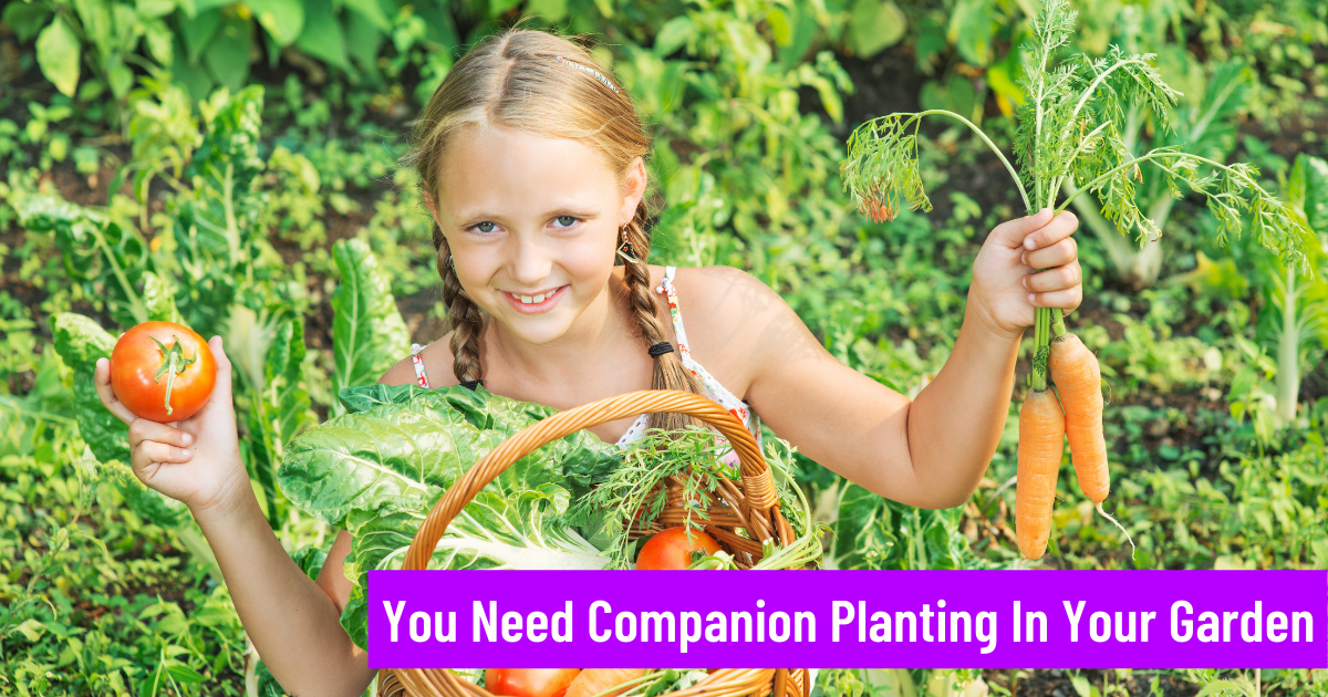 You Need Companion Planting in your garden